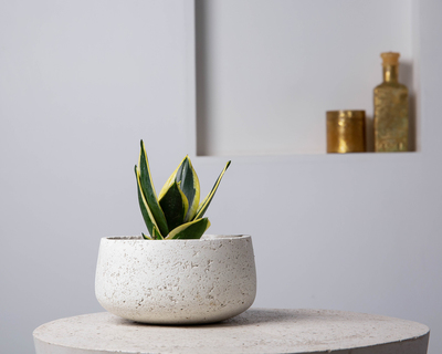 Concrete modern vessel planter grey hand pressed collection thumb